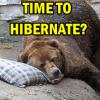 Market Timing / Market Direction – Time To Hibernate?