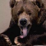 Bear Market - Definition