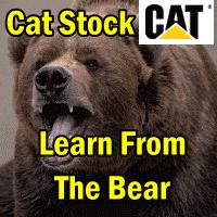 catstock-bear